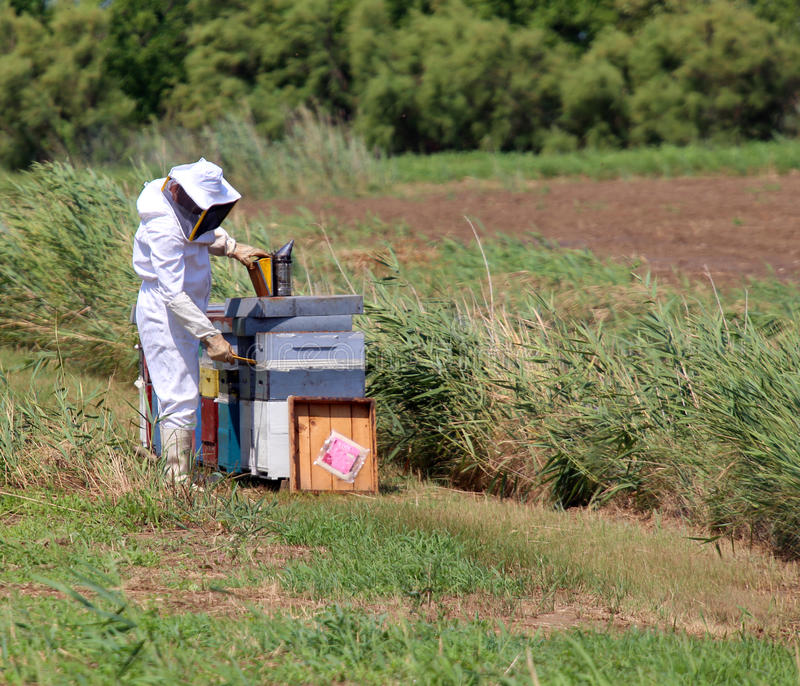 Imker met het beschermende kostuum terwijl het verzamelen van honing royalty-vrije stock foto's