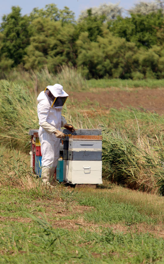 Imker met het beschermende kostuum terwijl het verzamelen van honing van h royalty-vrije stock fotografie