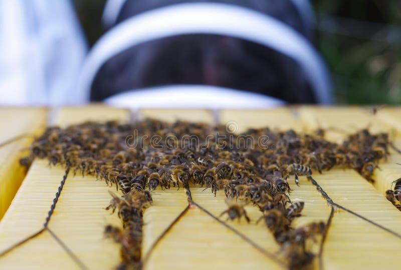 Imker mit Bienen lizenzfreie stockfotografie