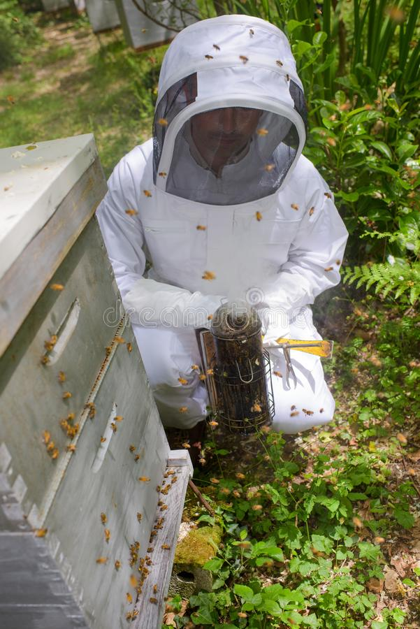 Imker mit Bienen herum lizenzfreie stockfotos