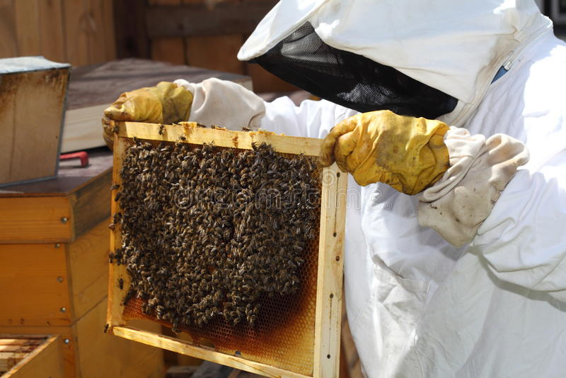 Imker und Bienenstock stockbilder