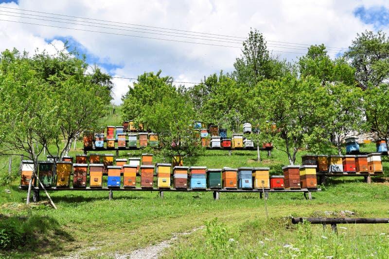 Imkerij in landelijke werf tijdens de lente stock foto's