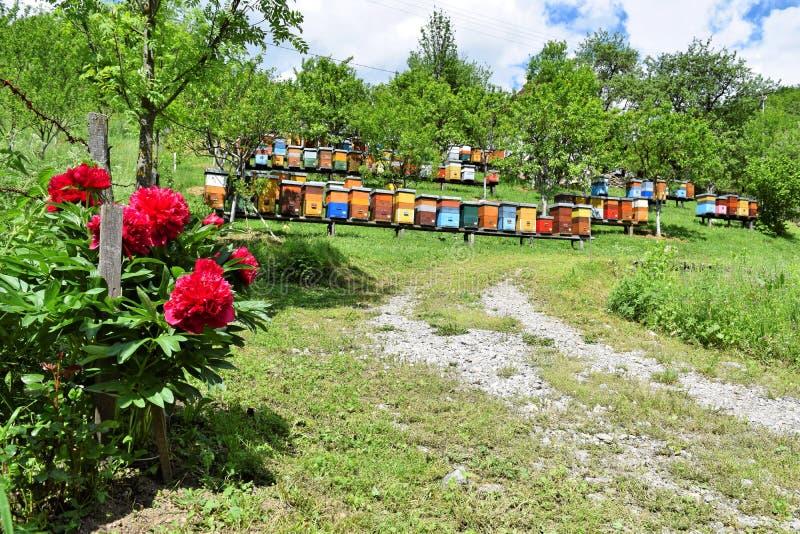 Imkerij in landelijke werf tijdens de lente stock afbeelding