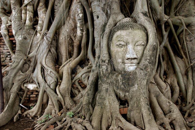 Immage de Buddha na árvore fotos de stock royalty free
