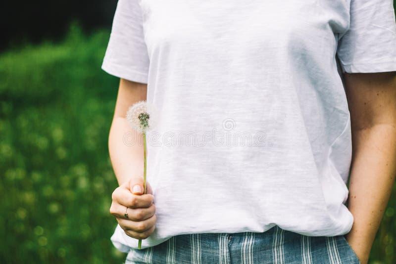 Immagine adorabile di estate di un dente di leone femminile della tenuta della mano contro il fondo dell'erba immagini stock
