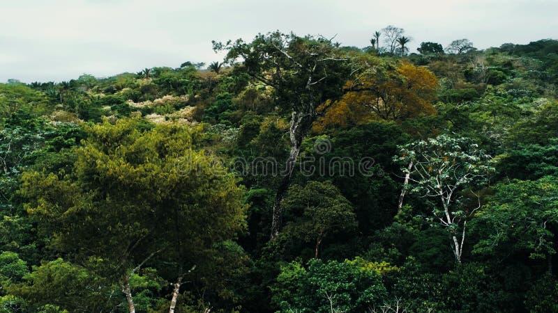 Immagine aerea del fuco della foresta pluviale al parco nazionale di Amboro, Bolivia fotografia stock libera da diritti