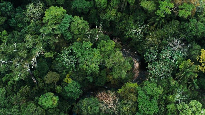 Immagine aerea del fuco della foresta pluviale e di piccolo fiume al parco nazionale di Amboro, Bolivia fotografia stock
