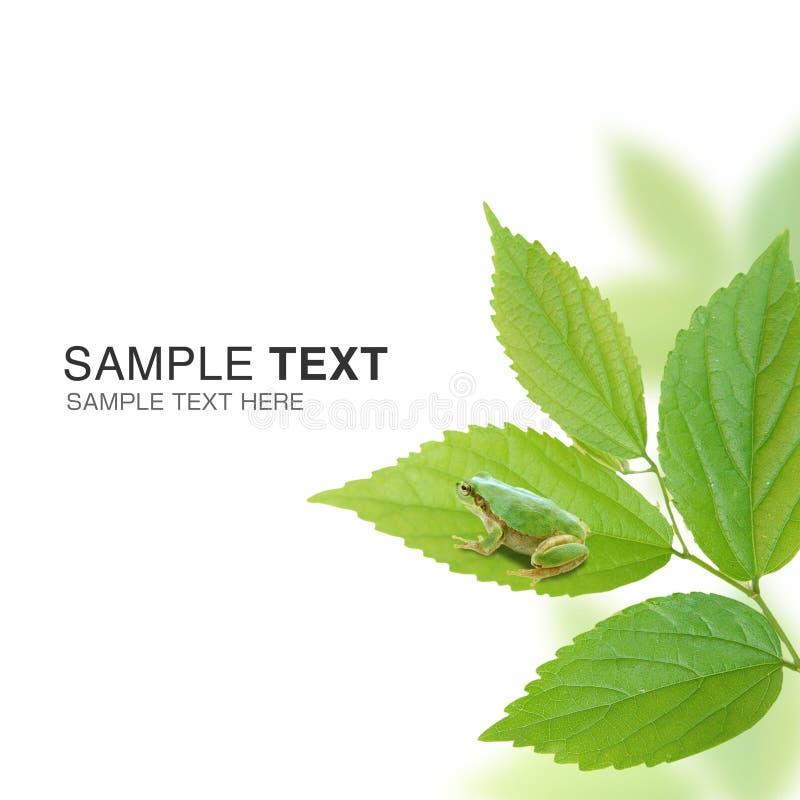 Immagine ambientale immagine stock