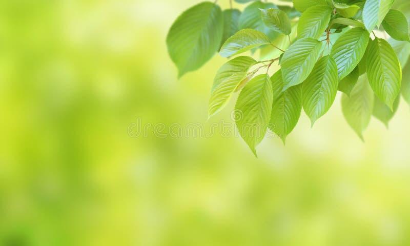 Immagine ambientale fotografie stock