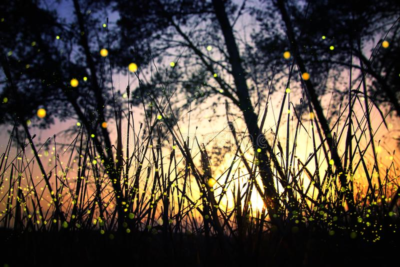 Immagine astratta e magica del volo della lucciola nel concetto di fiaba della foresta di notte fotografia stock