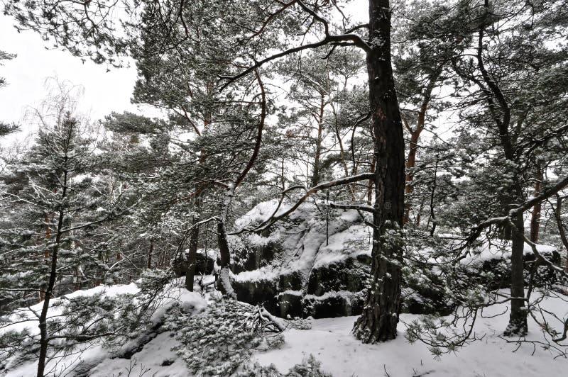 Immagine in bianco e nero della neve fotografia stock libera da diritti