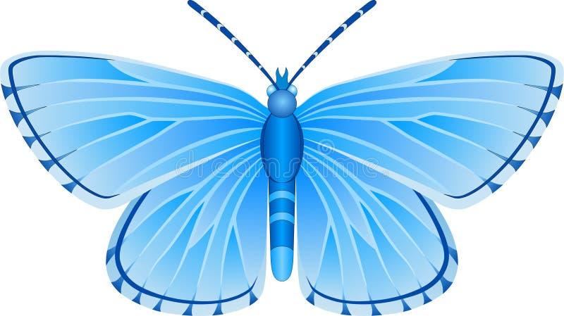 Immagine blu di vettore della farfalla di orbitulus di Albulina fotografia stock libera da diritti