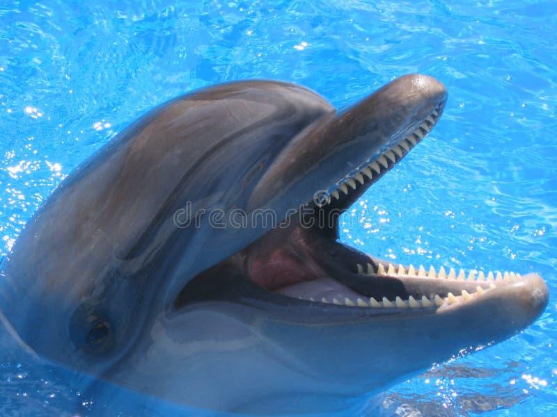Immagine capa del delfino - foto di riserva fotografia stock