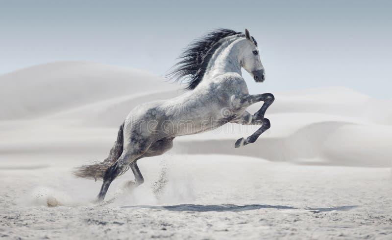 Immagine che presenta il cavallo bianco galoppante immagine stock libera da diritti