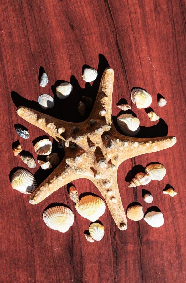 Immagine con una grande stella di mare circondata da molte coperture Stelle marine su fondo di legno Elementi del mare e dell'oce fotografie stock libere da diritti