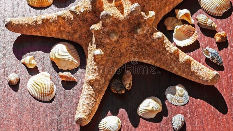 Immagine con una grande stella di mare circondata da molte coperture Stelle marine su fondo di legno Elementi del mare e dell'oce fotografie stock