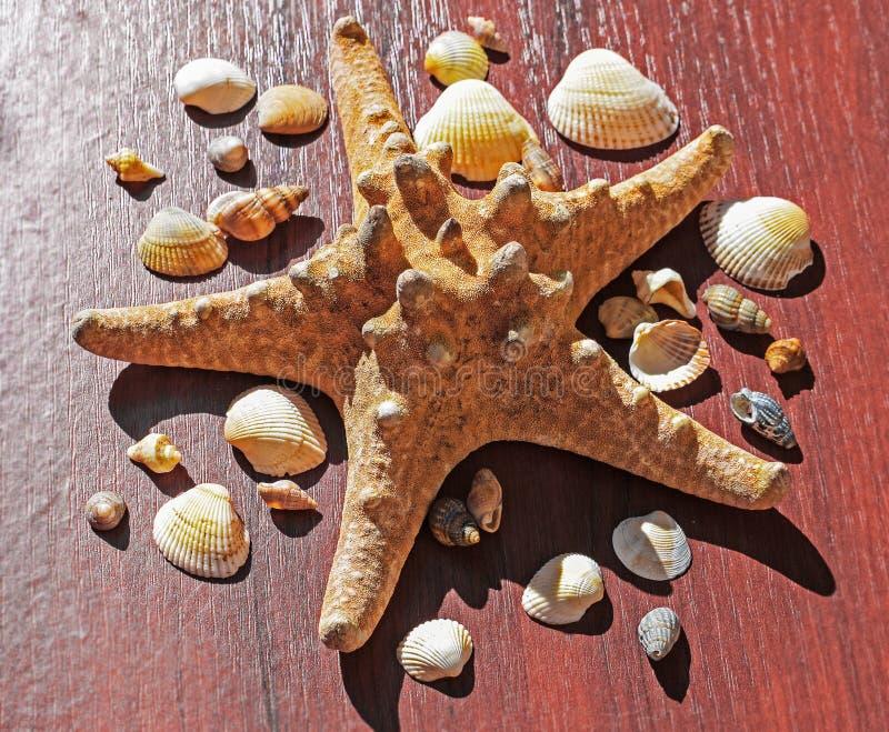 Immagine con una grande stella di mare circondata da molte coperture Stelle marine su fondo di legno Elementi del mare e dell'oce immagini stock
