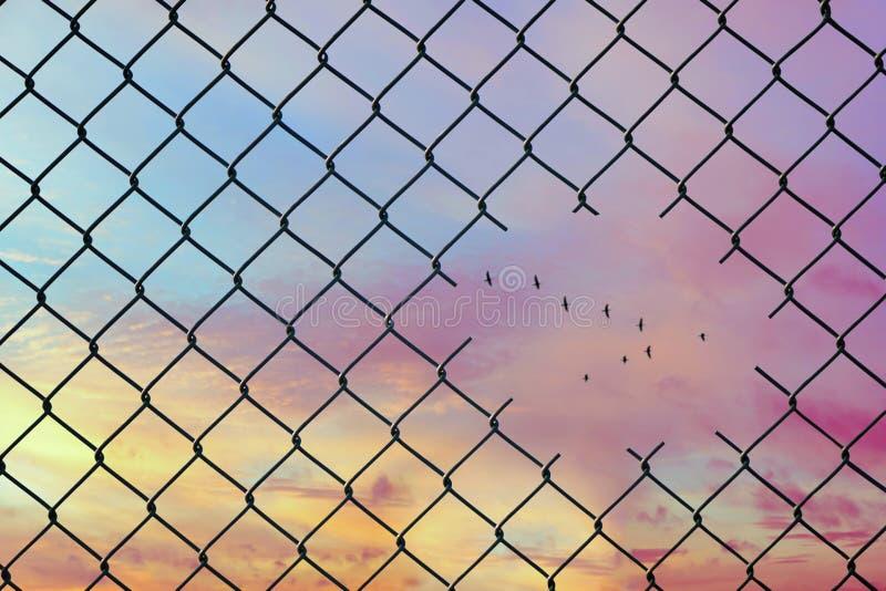 Immagine concettuale degli uccelli che volano sotto forma della v nel foro del recinto di filo metallico d'acciaio della maglia immagini stock