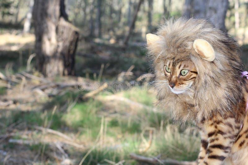 Immagine da commedia del gatto con una parrucca immagini stock