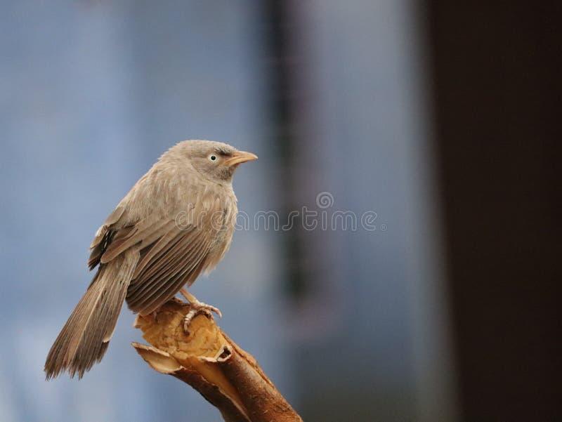 Immagine degli uccelli fotografia stock