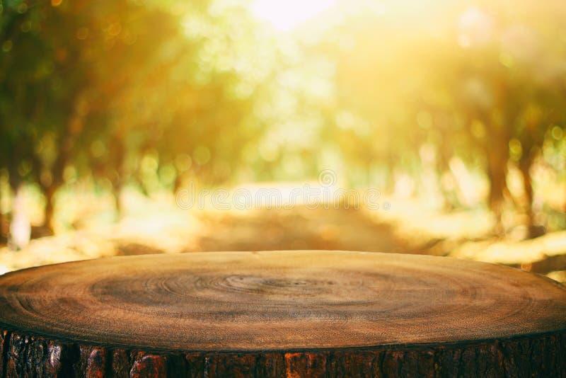 Immagine dei bordi e della foresta di legno rustici anteriori del fondo fotografia stock