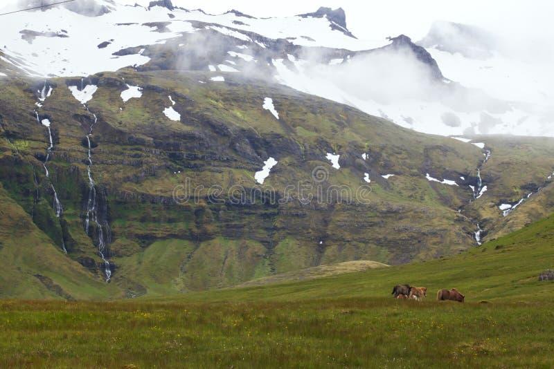 Immagine dei cavalli islandesi immagini stock libere da diritti