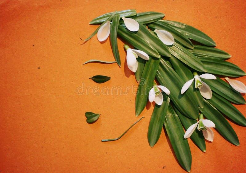 Immagine dei fiori e delle foglie, creatività e creatività, bucaneve, molla della ragazza fotografie stock