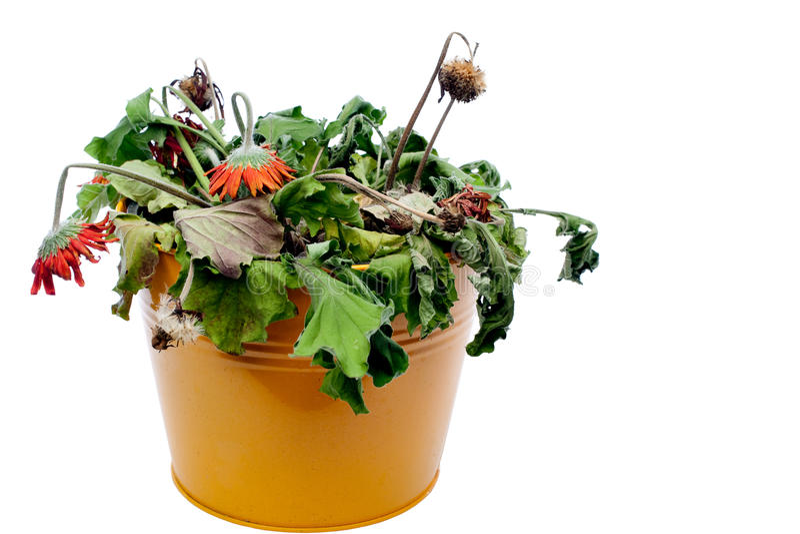Immagine dei fiori morti fotografie stock