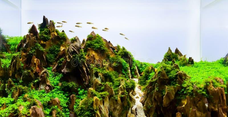 Immagine del carro armato dell'acquario di stile della natura del paesaggio immagini stock libere da diritti