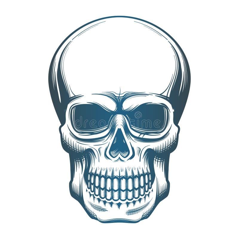 Immagine del cranio illustrazione vettoriale