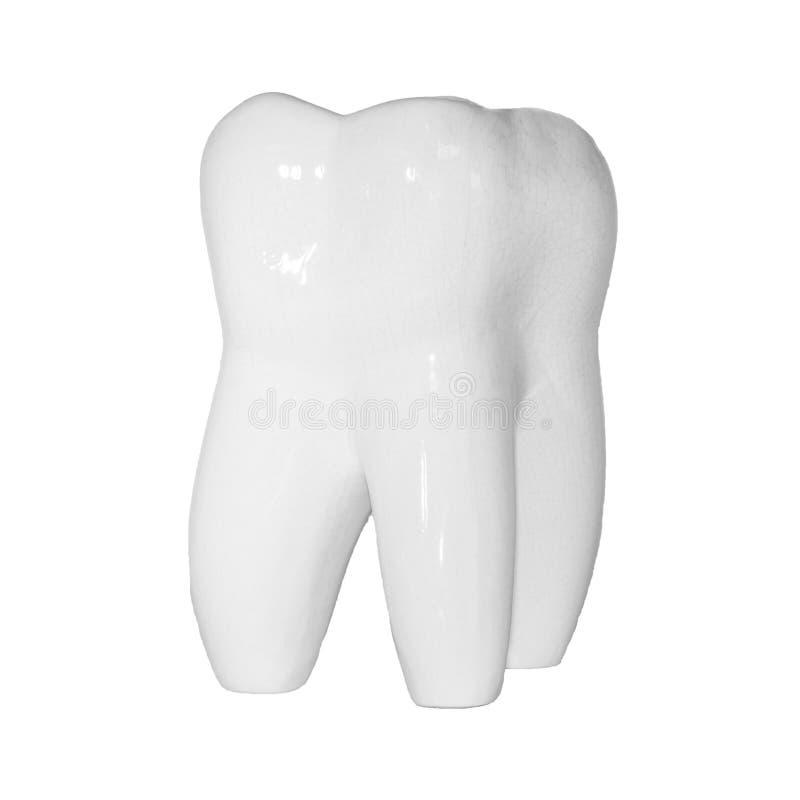 Immagine del dente molare umano su fondo bianco per struttura ed il logo fotografie stock