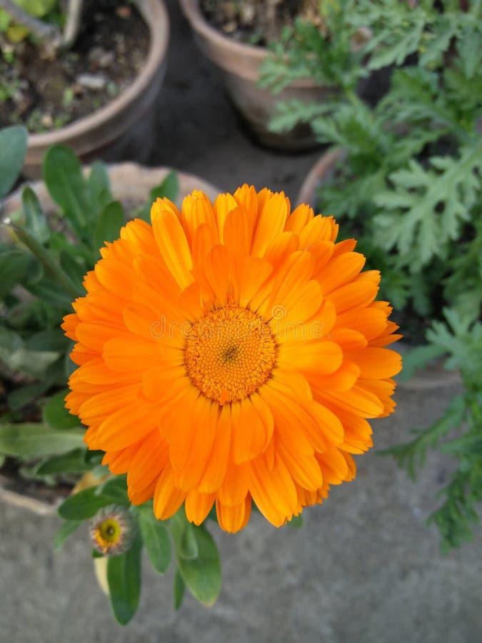Immagine del fiore fotografie stock