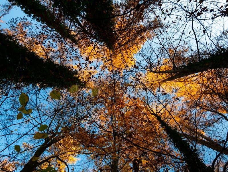 Immagine del fondo sulla vista lungo gli alberi immagini stock