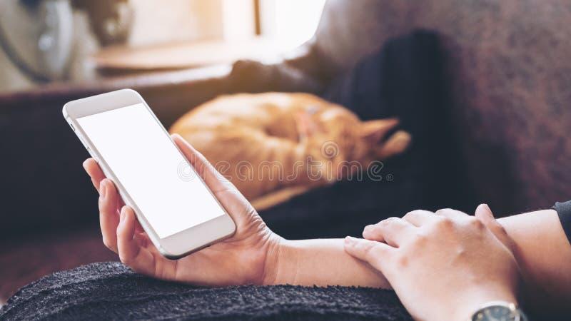 Immagine del modello di una mano del ` s della donna che tiene telefono cellulare bianco con lo schermo in bianco e un gatto marr immagini stock