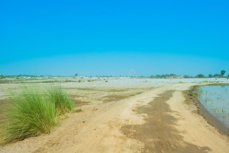 Immagine del paesaggio di un'area del deserto nel Punjab, Pakistan cattale che pasce fotografia stock