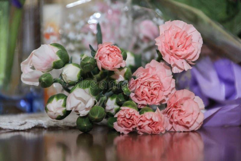 Immagine del primo piano di bei garofani rosa fotografia stock libera da diritti