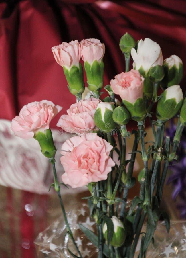 Immagine del primo piano di bei garofani rosa fotografie stock