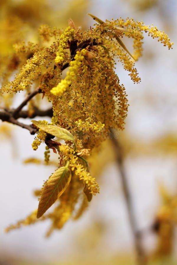 Immagine del primo piano di un albero di fioritura fotografia stock