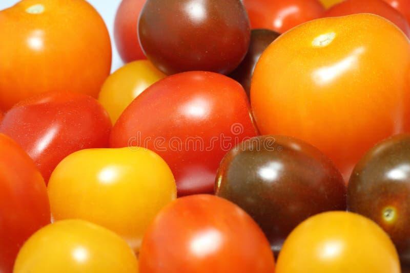 Immagine del primo piano del pomodoro dell'uva fotografia stock libera da diritti