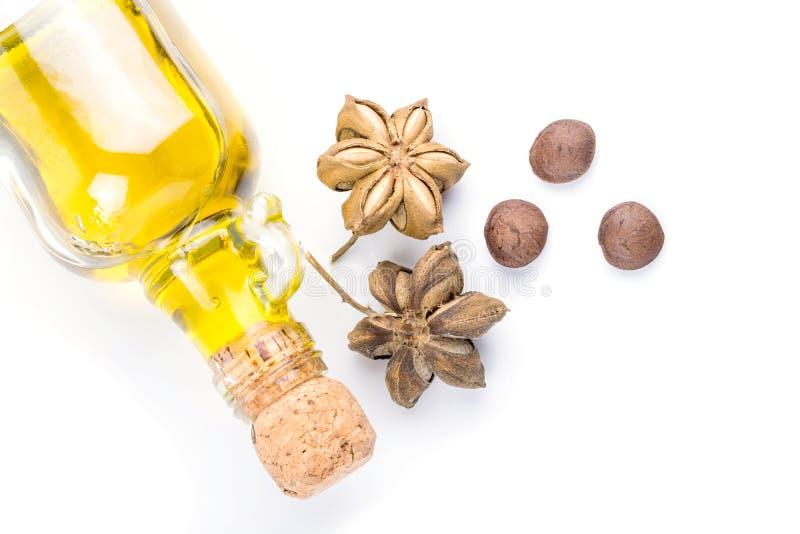 Immagine del seme dell'arachide di inchi di sacha fotografie stock libere da diritti