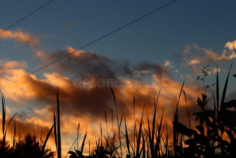 Immagine del tramonto dorato e dell'erba nell'aeroporto di Bonnechere fotografia stock