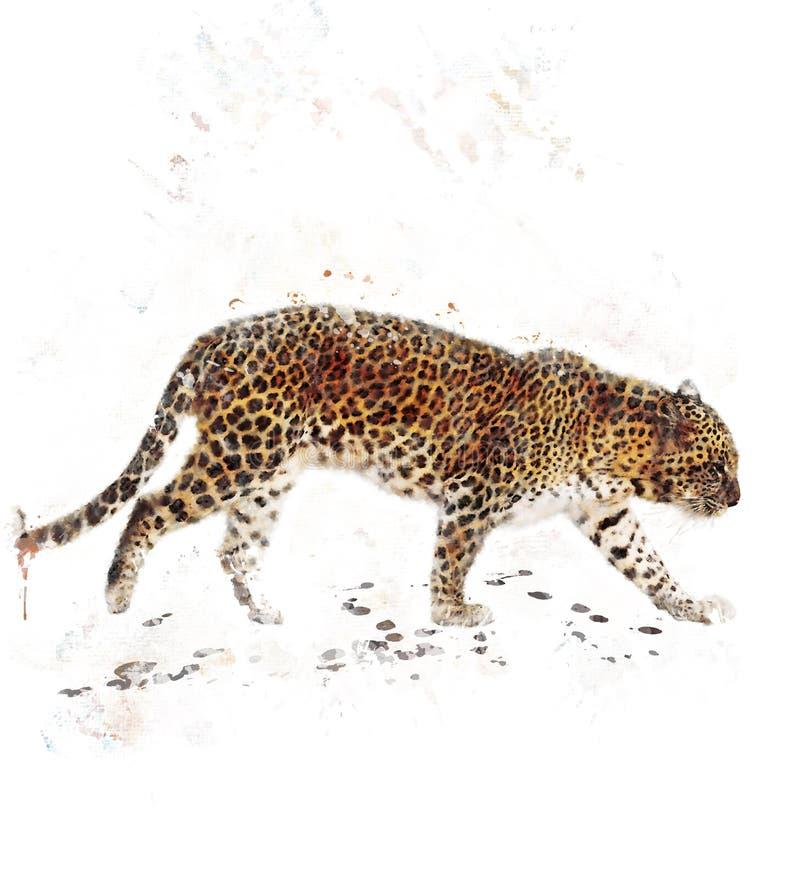 Immagine dell'acquerello del leopardo illustrazione di stock
