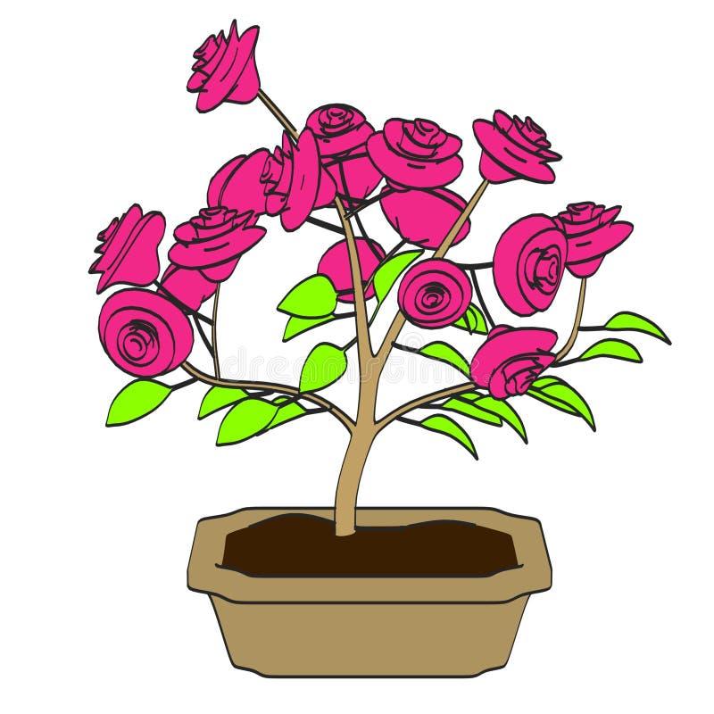 Immagine dell'albero dei bonsai illustrazione vettoriale