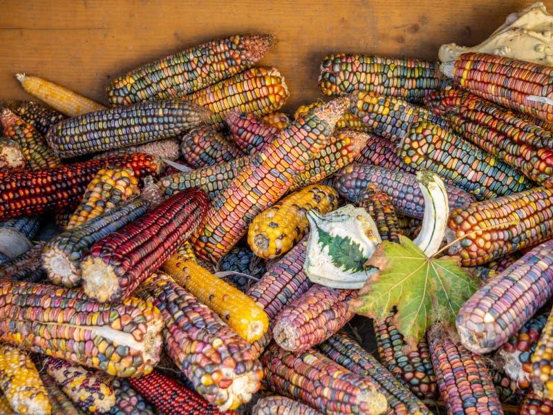 Immagine della fine variopinta del cereale sulla vista immagini stock libere da diritti