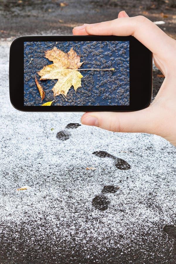 Immagine della foglia caduta congelata in prima neve immagini stock