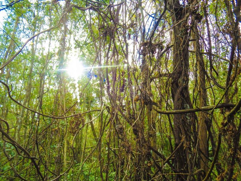 Immagine della foto di stagione di legni delle querce fotografia stock libera da diritti
