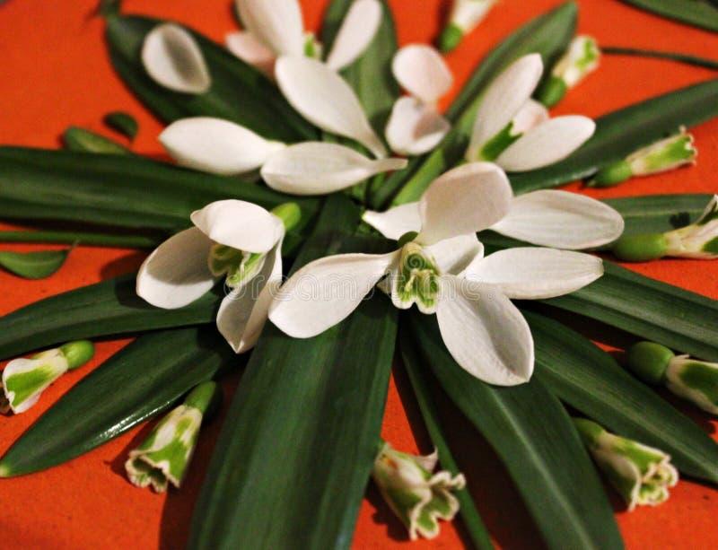 Immagine della primavera dei fiori e delle foglie, creatività e creatività, bucaneve, farfalla fotografia stock libera da diritti