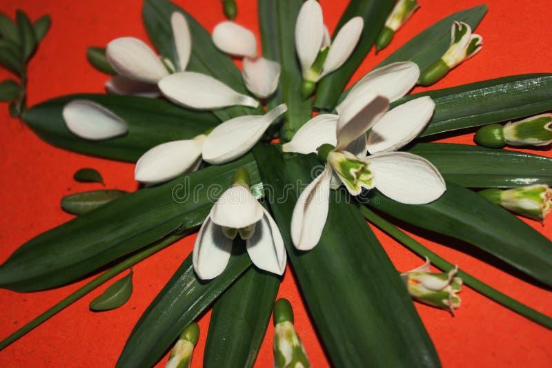 Immagine della primavera dei fiori e delle foglie, creatività e creatività, bucaneve, farfalla immagini stock libere da diritti