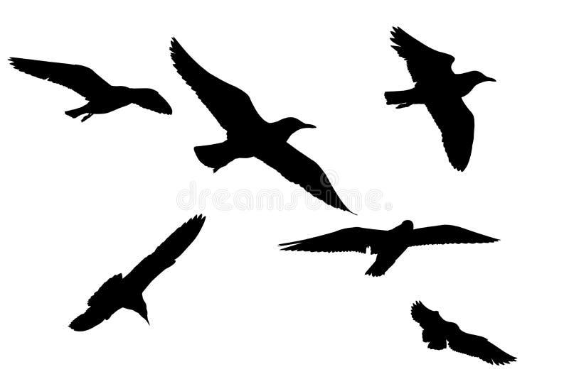 Immagine della siluetta Volo del gabbiano degli uccelli isolato royalty illustrazione gratis
