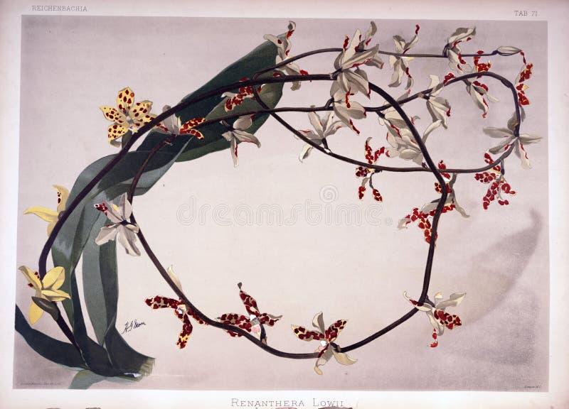 Immagine di arte Impronta digitale immagine stock libera da diritti
